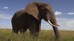 america 101 why an elephant for republicans video presidential