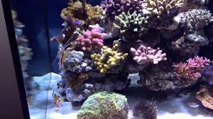 Coral Reef Home Decor Coral Reef At Home Youtube