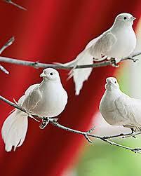 136 best dove images on beautiful birds birds