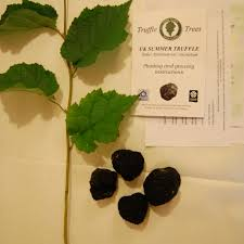 Patio Fruit Trees Uk by Quality Fruit Trees And Soft Fruit Plants For Sale Buy Online