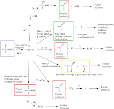 protein oxidation and peroxidation biochemical journal