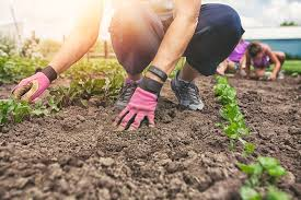 gardening picture what are garden soil amendments