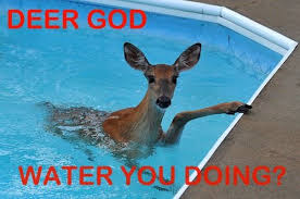 Oh Deer Meme - funny lol deer lord deer god pun onlyfatrabbit