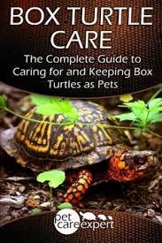 box turtle enclosures dude needs a home creativity
