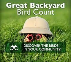Audubon Backyard Bird Count by Fcas Bird Counts