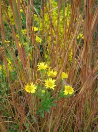 native plants to maryland a native plant primer u2013 botanical gardens at asheville