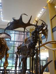 natural history museum of london u2013 mostly mammoths mummies and