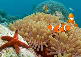 australian native plants pictures and names great barrier reef fish species pictures information u0026 more