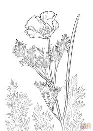 california poppy coloring free printable coloring pages