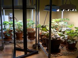 Plants That Survive With No Light Lighting Your Indoor Garden Electronic Products
