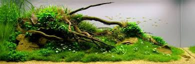 Aquascape Design Layout Layout Forms In Aquascaping Aquascaping Wiki