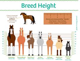 horses height explained horses pinterest horse horse care
