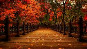 falling tag wallpapers page 7 golden october colorful serenity