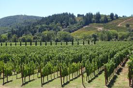how to find land suitable for growing vineyards