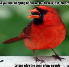 Stupid Animal Memes - stupid birds by hoangjojo meme center