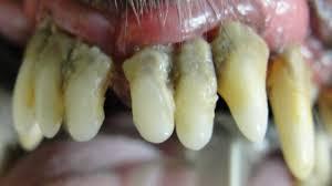 specialty dental care at grass lake animal hospital jackson