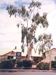 coolum native nursery trees and shrubs to 6 metres tree of knowledge australia wikipedia