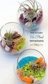 diy mini hanging air plant terrarium find 3