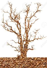 abstract background of sawdust in the tree of meaning to the stock