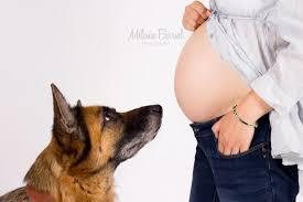 comment empecher chien de monter sur le canapé l arrivée de bébé comment bien préparer chien nature de