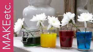 kids u0027 science experiment how to turn white flowers into