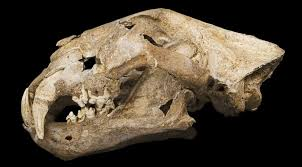 move mammoth effort focus cloning cave lions