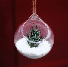 succulent kits hanging glass orb succulent terrarium kit by dingading terrariums
