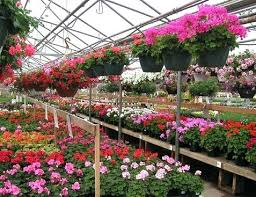 flowers store near me flower plant store deals24h club