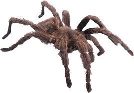 spider web transparent background png image