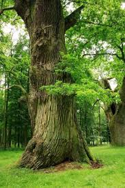 some trees farm bacteria to help supply nutrients sciencedaily
