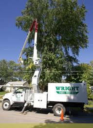 wright tree service about us