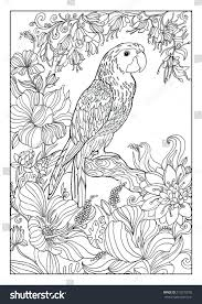 coloring book twenty pages parrot stock illustration