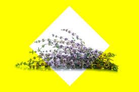 home remedies for fleas reader u0027s digest