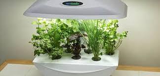 stunning inspiration ideas micro garden design urban micro