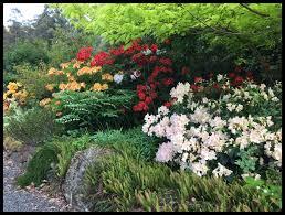 native tasmanian plants crawleighwood nursery and garden