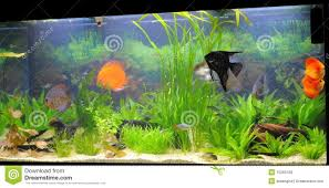 types of aquarium fish for home