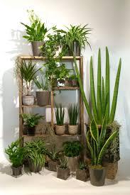 plante d駱olluante chambre chambre plante depolluante maison tendance les plantes avec plaza