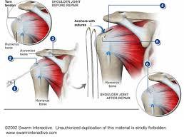 Anatomy Of Rotator Cuff Arthroscopic Rotator Cuff Repair Orthoneuro