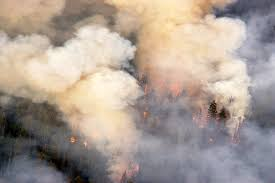 Wildfire Quesnel by National Forest Week Province To Work With Communities On