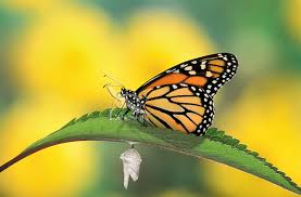 lessons we can learn from a butterfly