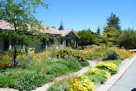 native plant landscaping ideas cool california native plants for the garden marvelous ideas 17