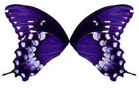 butterfly wings purple aqua by fairyfindings on deviantart