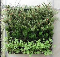 amazon com amars 9 pockets vertical wall mount garden plant grow