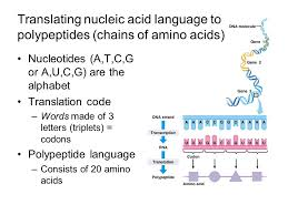 molecular biology expanding on macromolecules dna rna dna and