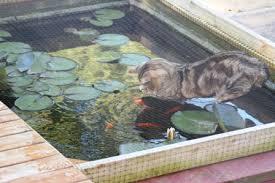 backyard decor tips on creating and maintaining a backyard fish