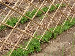 Bamboo Cucumber Trellis Bamboo Pea Trellis Lifegrower On Organic Gardens And Life