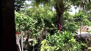 judy house cottages u0026 rooms negril jamaica travel youtube