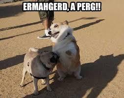 Ermahgerd Animal Memes - ermahgerd a pug