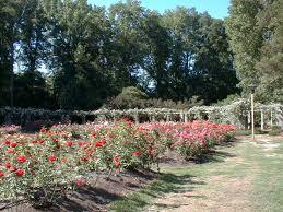 Raleigh Botanical Garden Raleigh Nc Raleigh Garden Photo Picture Image