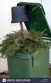 tree in a bin rubbish thrown away discarded bin dustbin